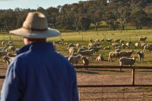 COVID-19_Sheep farmer